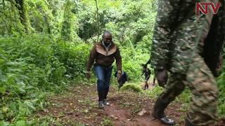 NTV GREEN: Exploring Kapchorwa's Kapkwai forest