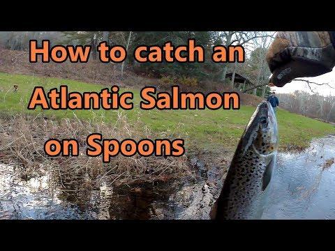How To Catch Atlantic Salmon On Spoons