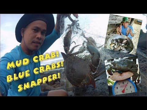 Mud Crab! Blue Crabs And Snapper Catch In Fishing Net