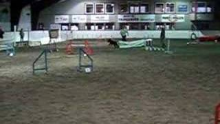 Giant Schnauzer Agility Class 1 Jumping Large Dogs