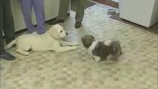 Reading Play Behavior 1 - Training The Companion Dog 1  Socialization & Training