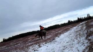 Pony Temper Tantrum