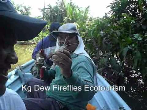 Memancing udang galah kg dew  kamunting taiping perak