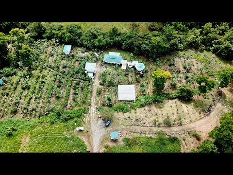 Creating A Dreamy Homestead In Costa Rica: Shocking Abundance In Only Months Of Growth!