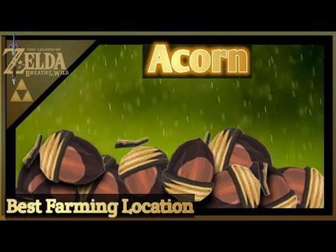 Best Acorn Farming Location-Zelda Breath Of The Wild