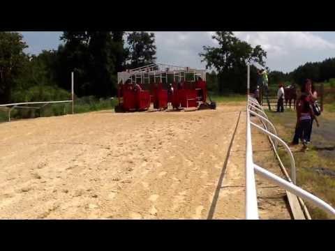 Carreras de caballos en dalton ga
