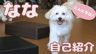 おやつには目がない!?ナナちゃんの自己紹介動画です☆ ドッグテイルで...