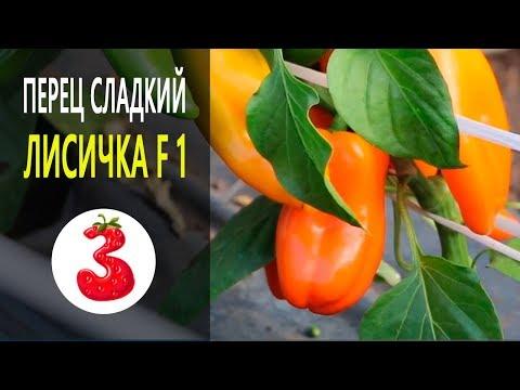 ПЕРЕЦ ЛИСИЧКА F1 идеально для домохозяек | фитофрора | садоводов | земляника | вырастить | вредители | саженцы | помидор | фрукты | семена | огород