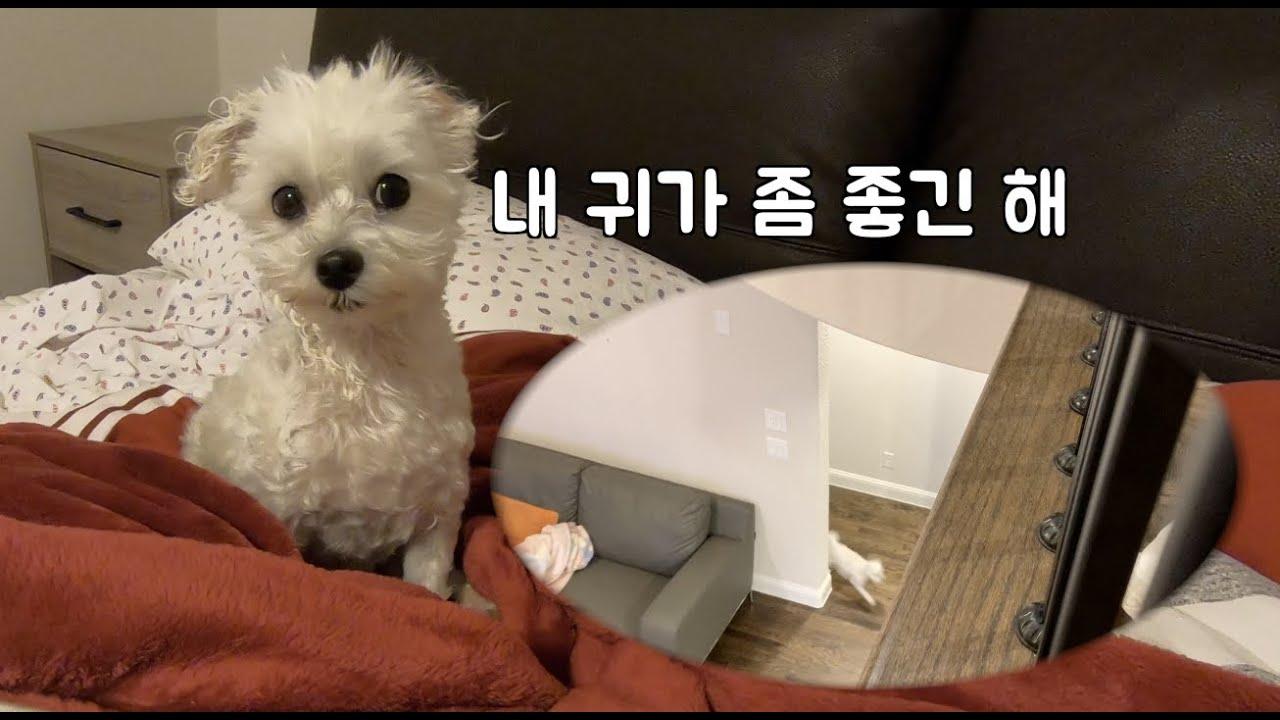 강아지는 정말 귀가 좋을까? 2층에서 불러보는 청력 테스트