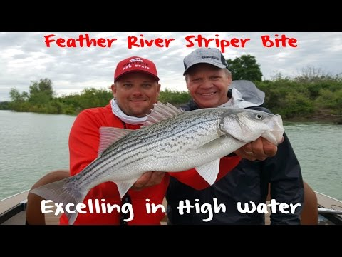 Feather River Striper Fishing