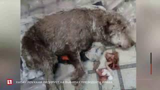 В Уфе защитники животных выходили собаку, в которую ранее стреляли 9 раз