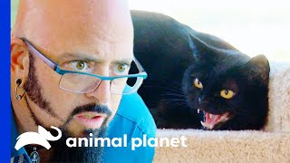 Jackson Saves Aggressive Cat From Being 'Put Down' | My Cat From Hell