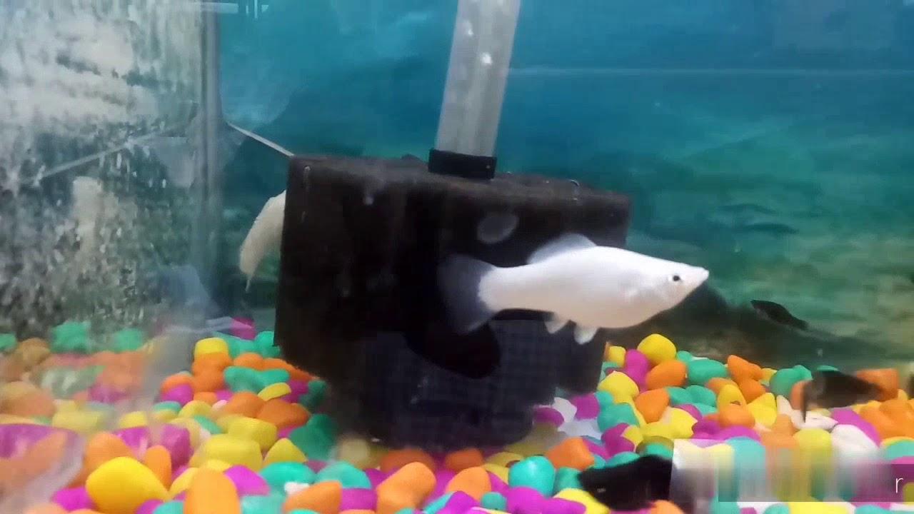 Aaj ka video fish stock