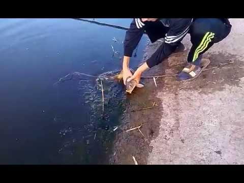 Рыбалка в Чумаках Днепропетровской области 2016 год - YouTube