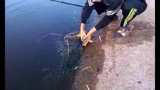 Рыбалка в Чумаках Днепропетровской области 2016 год(, 2016-08-08T13:00:22.000Z)
