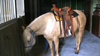 Come sellare un Cavallo - Cavalli e Amore