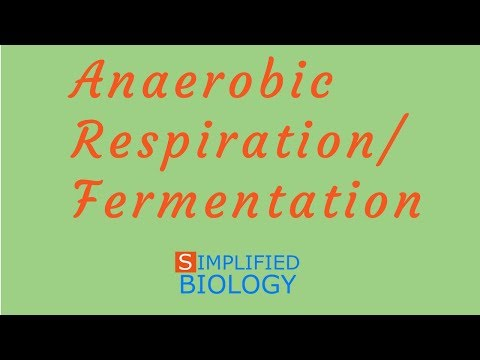 ANAEROBIC RESPIRATION /FERMENTATION for NEET, AIIMS, AIPMT, MCAT, JIPMER, PREMED
