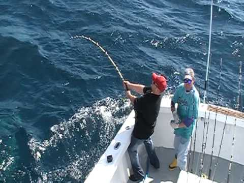 Destin fishing charter shark fishing youtube for Destin shark fishing