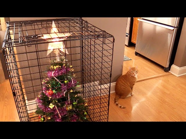 10 Ways To Survive Christmas With Cats!