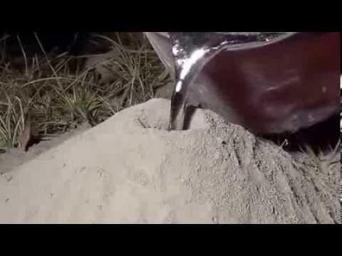 Что будет если залить свинец в муравейник