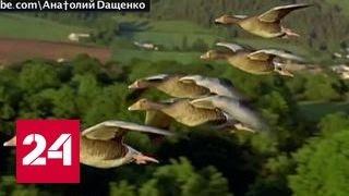 """Украинская газета рассказала, куда летят птицы из """"голодной"""" России"""
