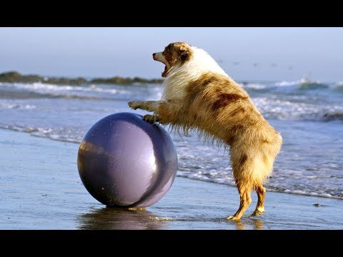Amazing! Dogs with special skills - Your Dog? |Funny Animals