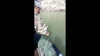 Рыбалка поймали сома