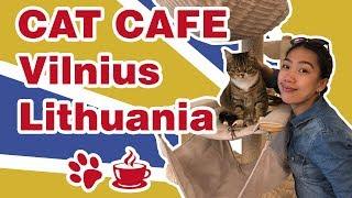 Cat Cafe😺 in Vilnius, Lithuania   Good cafeteria in Vilnius