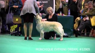 Crufts 2013 Open Dogs (full version)