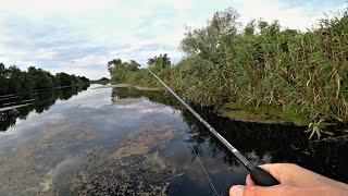НОГИ ЗАТРЯСЛИСЬ ОТ ЭТОЙ ПОИМКИ ДИКИЕ ПОКЛЁВКИ КРУПНЯКА на ПОВЕРХНОСТИ ВОДЫ Рыбалка 2021