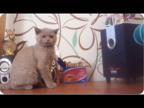 Rave Dancing Kitty | Cat Vs. Subwoofer