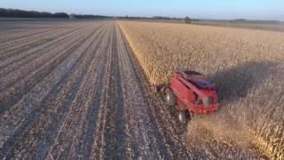 Уборка подсолнечника и кукурузы.