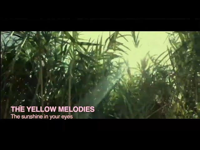 THE YELLOW MELODIES -  The sunshine in your eyes [VIDEO CLIP]