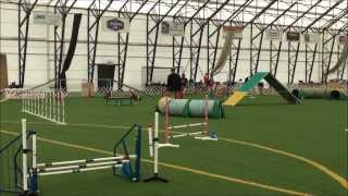 German Shorthair Pointer Club's Akc Agility Trial