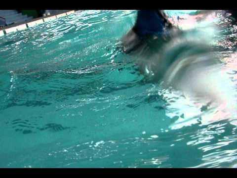 Swimming PART 3