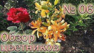 Обзор цветников №6 (19.06.2018). Розы, хризантемы, лилии, альстромерии, гортензия