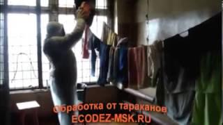 видео Специализированная служба по уничтожению Мух в Москве