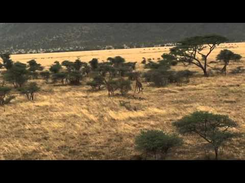 A short 30s clip of my safari in Tanzania.