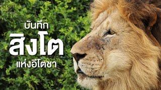 สารคดี สำรวจโลก ตอน บันทึกชีวตสิงโตแห่งอีโตชา
