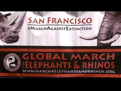 GLOBAL MARCH FOR ELEPHANTS & RHINOS SF - Musical Medicine with Soleil Dakota