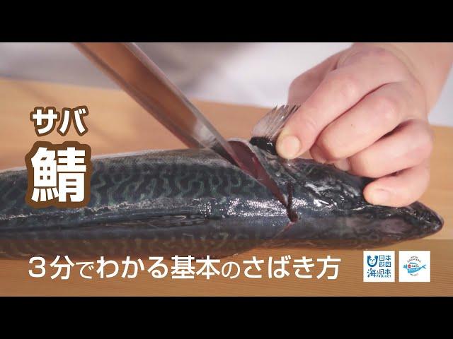 鯖(さば)のさばき方 – How to filet Mackerel -|日本さばけるプロジェクト