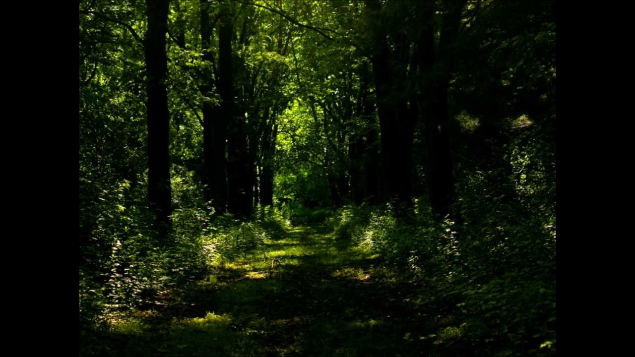 Mysterious Forest - Youtube-8703