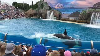 The New ORCA Encounter  at Sea-world San Diego  2018