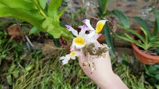 12/6 lô hàng 800kg hoa lan mới về rất nhiều loại lan đẹp bán giá rẻ ..lh 0348886368