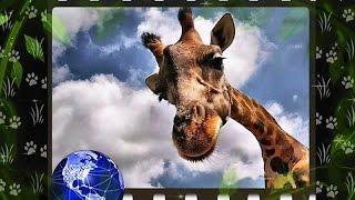 В мире животных (♪♫ Paul Mauriat-Alouette) HD