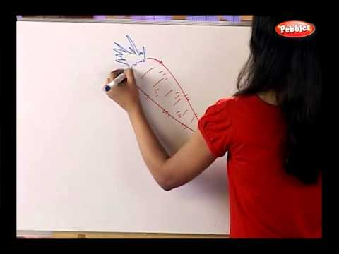 How To Draw A Vegetables Drawing For Kids