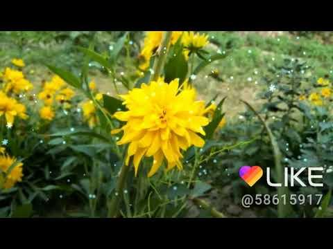 Beautiful Nature Video Nature Postive Nature Beauty Good