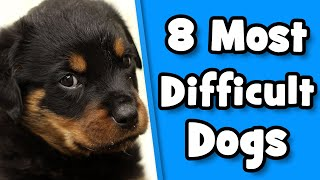 Difficult Dog Breeds  8 Worst Dogs For First Time Owners