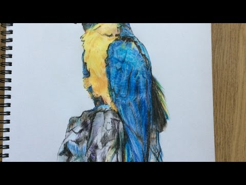Draw a Colourful Parrot – DIY Crafts – Guidecentral