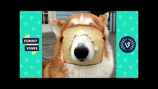 Best ANIMALS FAILS Compilation 2018 - Funny Animal Videos   Funny Vines